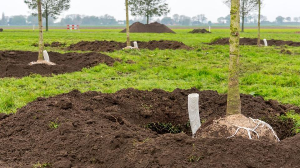 Natural Plastics boomverankering